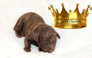 DSC_0302 Queen Charlotte