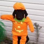 Dressing up my dog at Halloween idea